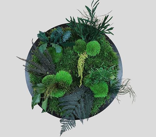 Pflanzenbild Ø 40 cm