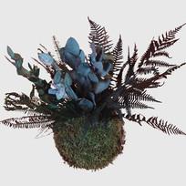 Kokedama 17 cm mit konservierten Pflanze