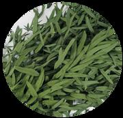 Eukalyptus Nicoli