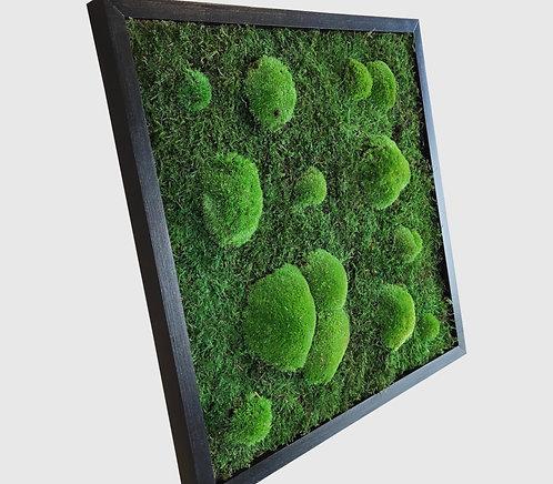 Moosbild 50x50 cm