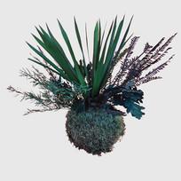Kokedama 10 cm konservierte Pflanzen