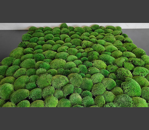 Kugelmoos 0,5 - 1 m²