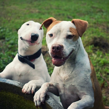 South Paw Dogs