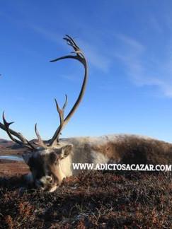 tour 4 reindeer.jpg