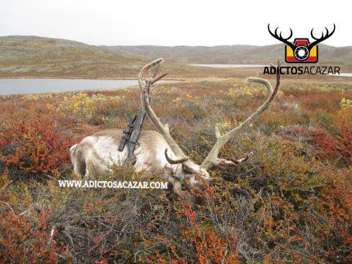 Reindeer tour 1.jpg