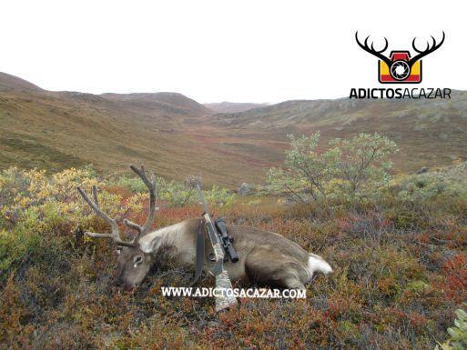 tour 1 reindeer.jpg