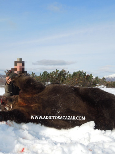 Kamchatka bear_censored.jpg