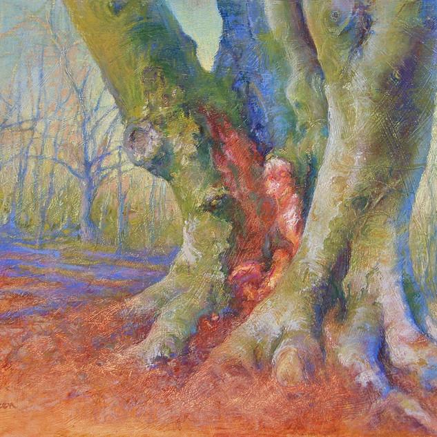 Wissahickon Tree Trunk.jpeg