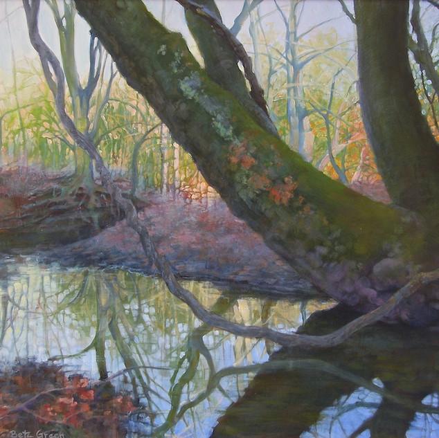 """Wissahickon Creek at Morris Arboretum"""