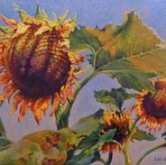 Mammoth Sunflower.jpeg
