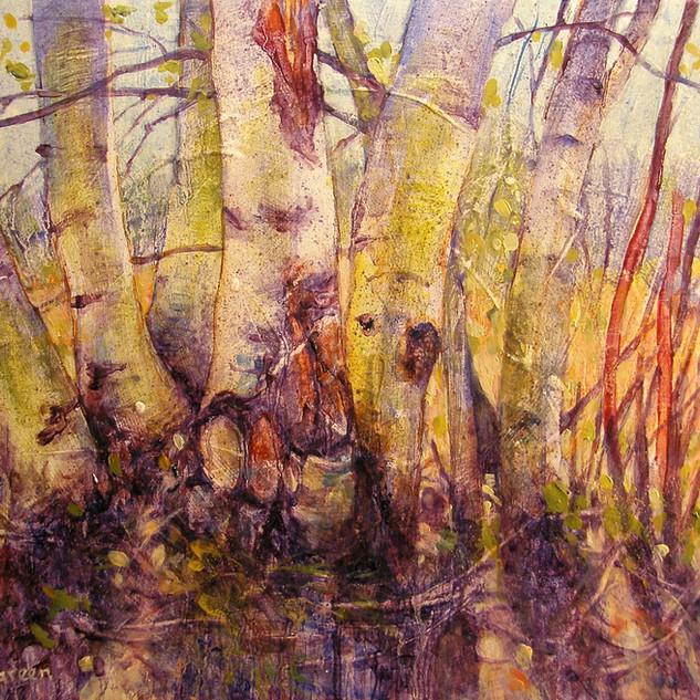 """Birch Trunks"""