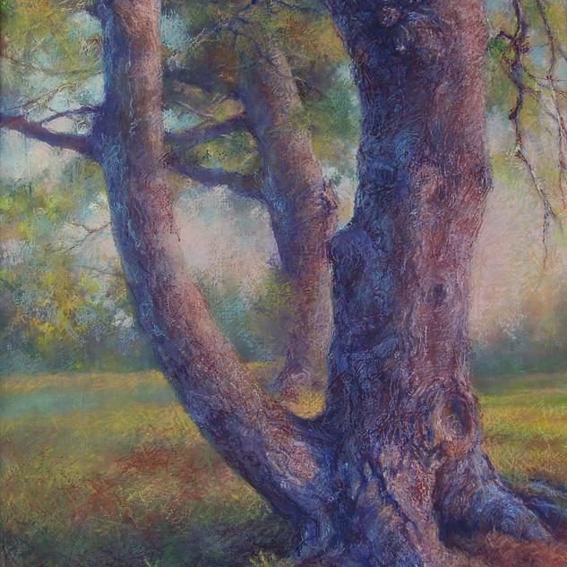 Border Pines 2.jpeg