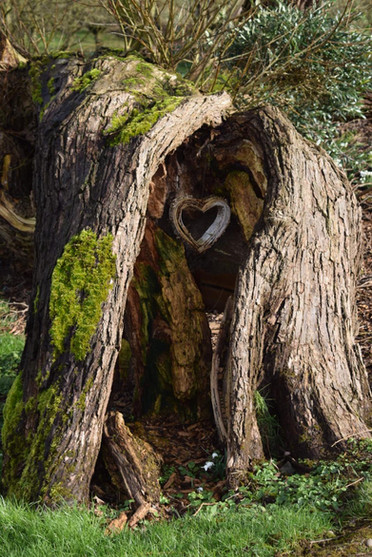PHOTOhearttree3-54-58.jpg