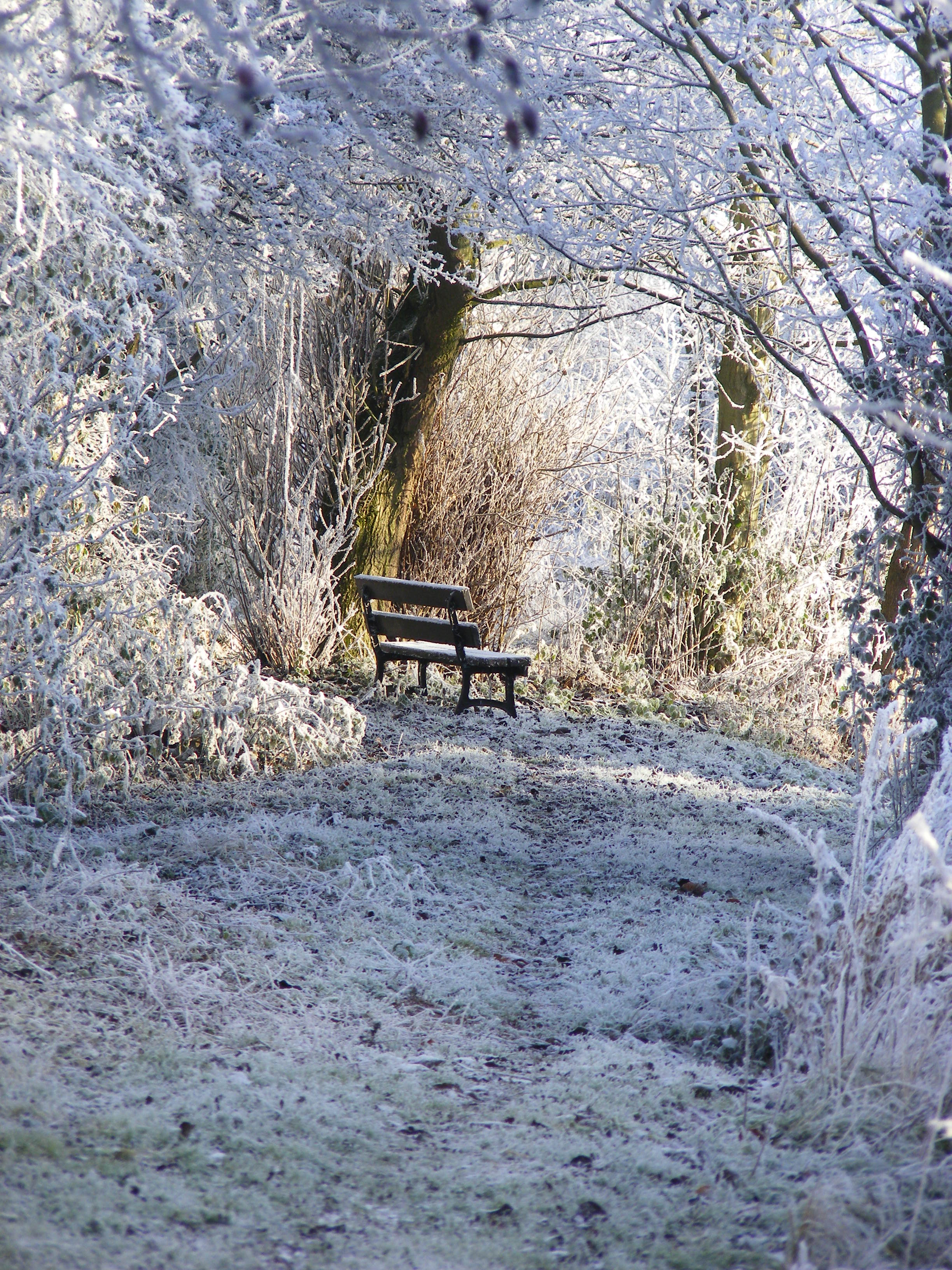 Winter walks at Nettle Hill