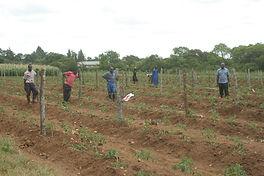 Gweru Farm, Zim. Help International