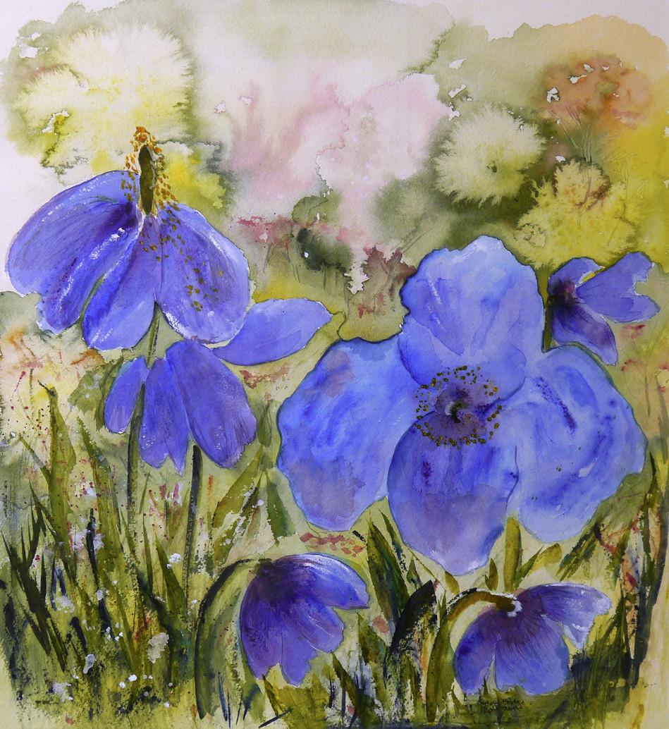 Petals of Blue