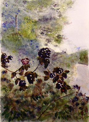 Skelwith Blackberries