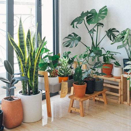 5 Benefits of Indoor Plants