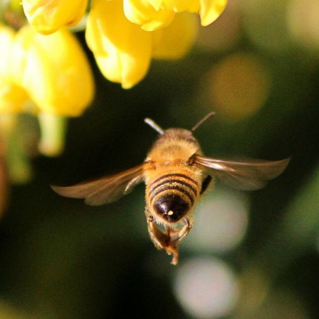 15 Facts About Honeybees