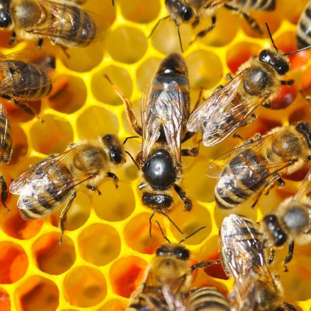 Every Honeybee Has A Job To Do