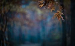 un automne dans nos Fagnes