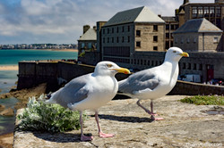 Saint Malo intra murros
