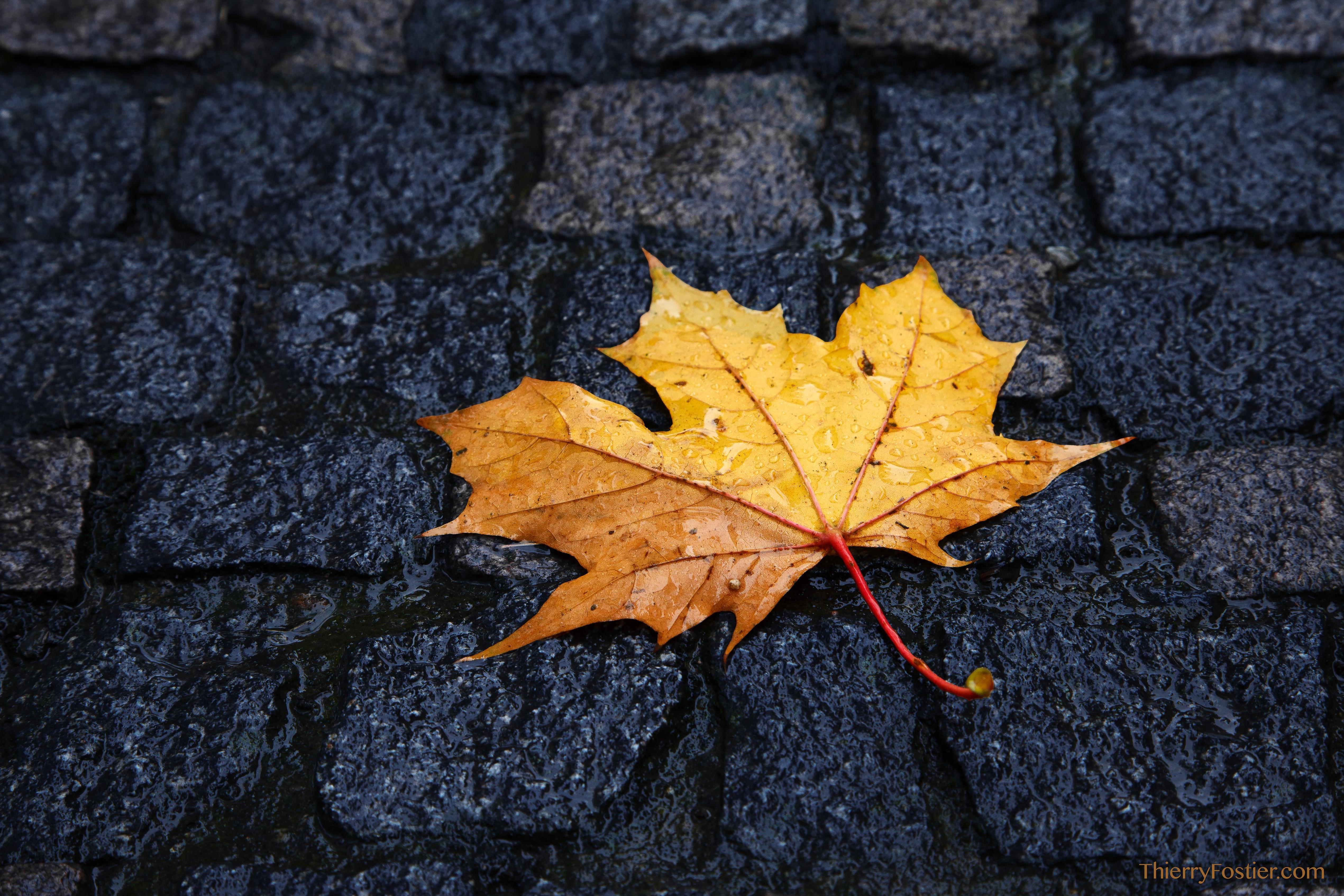automne à Verviers
