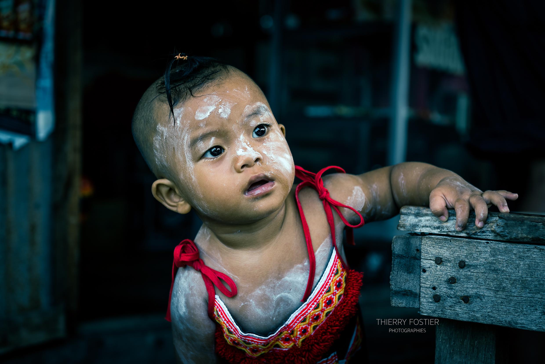 bébé birman