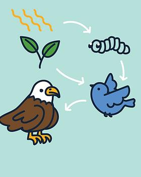 P6 topics food chain and webs, adaptations