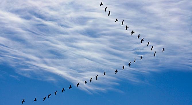 Oiseaux-en-vol_©.png