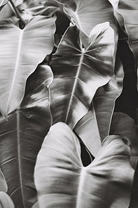 Naturopath, Mebourne, Louisa Khoury