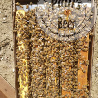 Make deposit Bee Nucs