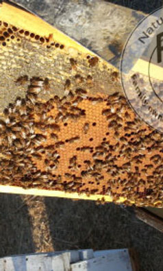 Pay in Full Bee nuc