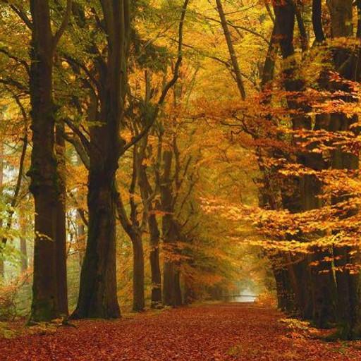 Herfst-/boswandeling