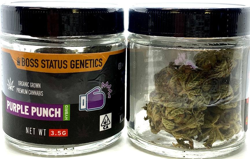 Purple Punch-Boss Status Genetics