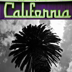 nk-CA palm-green-purple-24x24.jpg