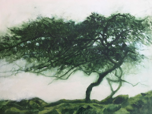 'Windswept' SOLD