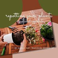 Repotting your plants.jpg