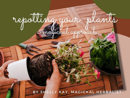 Repotting Plants ~ A Magickal Approach