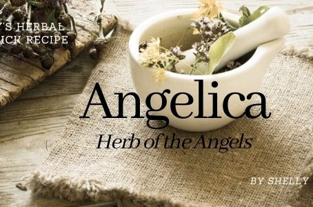 Angelica Herbal Magick for July