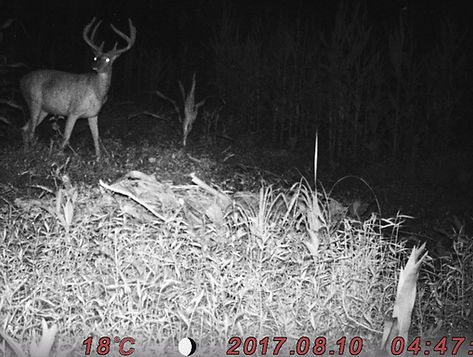 Picture of two new trophy whitetail deer bucks at the best Kentucky outfitter.