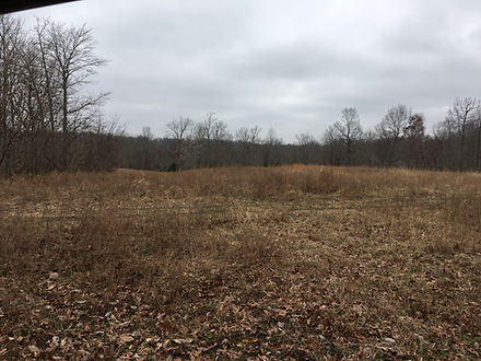 A large field to build a house or cabin.