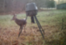 This old Kentucky whitetail deer has some mass on his rack.