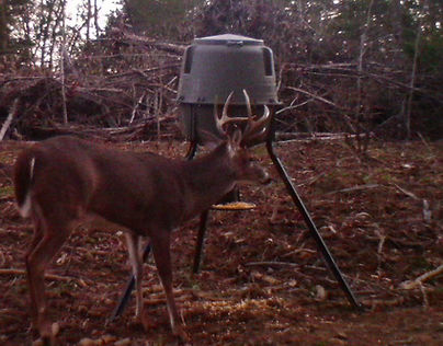Hart County Kentucky is known for double main beam bucks like this one.