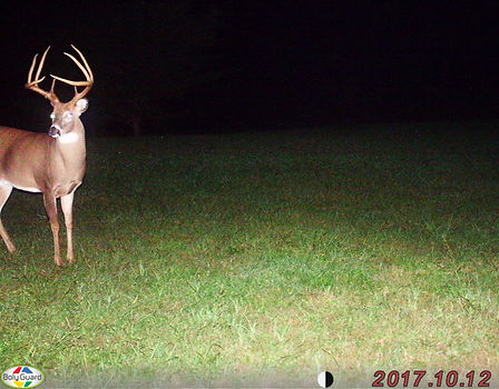 This is a nice tall eight point buck that showed up recetly.