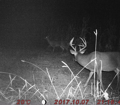 Side view of the 9 point buck with a stiker point.
