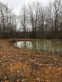 A wildlife pond for deer and turkey hunting with a deer stand behind it.