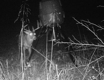 It's a night picture, but you can still tell he's a huge 8 point buck.