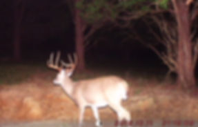 A big whitetail buck from last year that got huge this year.