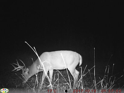 Here is a nice 9 point whitetail dee with a kicker point.